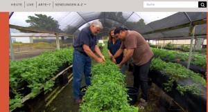 Kultivierung von Wildpflanzen