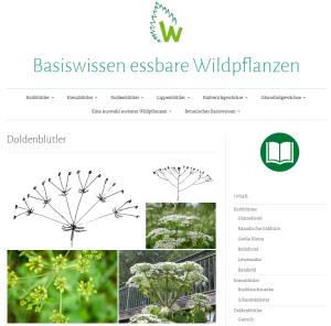 Basiswissen essbare Wildpflanzen