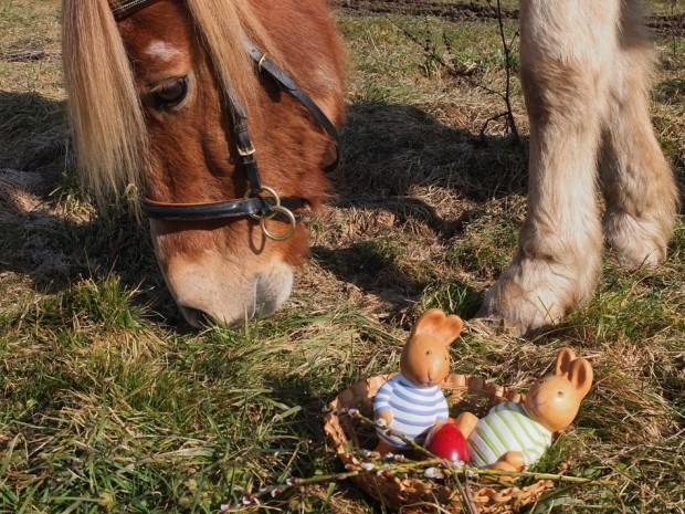 Ostereier und Wildpflanzen suchen mit Pferd