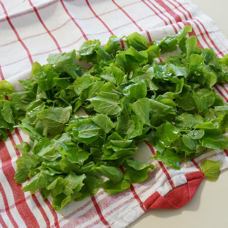 Lindenblätter für den Salat