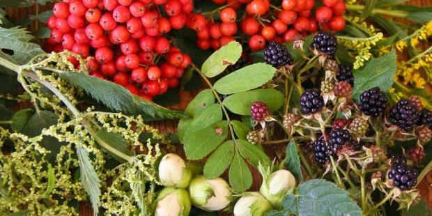 Wilde Sommer und Herbstfrüchte