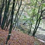 Buchenwald am See