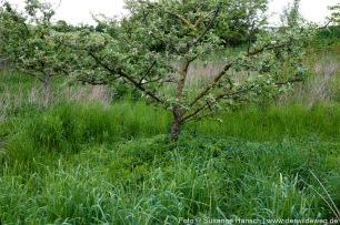 Obstbau mit wilden Beipflanzen