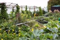 Permakultur-Gartenbau